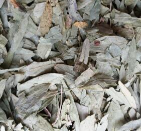 中药材 产地直销优质番泻叶 排毒通便花草茶