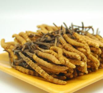 虫草多糖 棕黄色虫草菌粉 25kg/桶虫草多糖