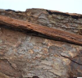 非洲安哥拉卡宾达树皮男性产地泡茶特强