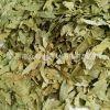 中药材批发 潘泻叶 又名旃那叶、泡竹叶 治疗热结便秘、积滞腹胀