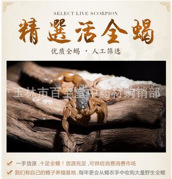 常年供应野生洛阳山蝎子种苗野生全蝎食用蝎子药用蝎子活蝎子