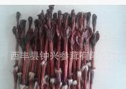新西兰鹿鞭批发 优质保真 农产品 中药材 滋补保健 西丰厂家