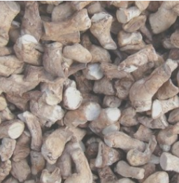 批发供应出口香菇脚