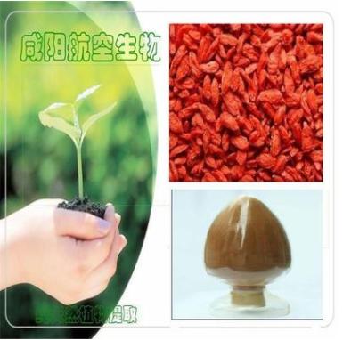 厂家直销 优质宁夏枸杞干果粉 有机枸杞提取物 枸杞多糖
