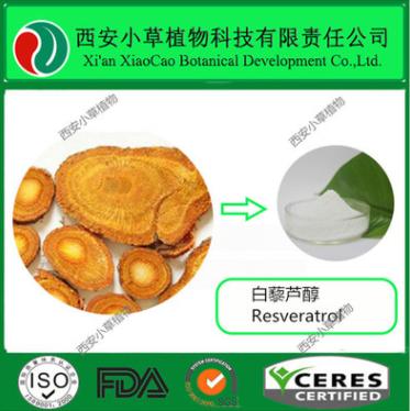 厂家现货虎杖提取物 白藜芦醇50%-98%