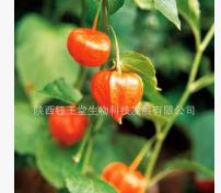 HPLC检测富含醉茄内酯南非醉茄根部提取南非醉茄提取物