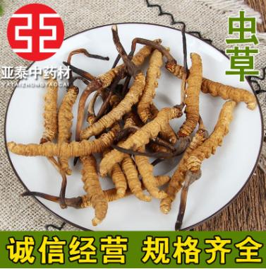 批发供应 冬虫夏草 虫草 西藏精选 各种规格 大货供应 量大从优