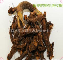 农民自己挖 天然野生中药材虎杖根 酸筒杆 酸桶芦 大接骨 斑庄根