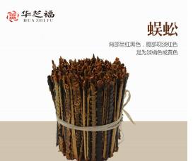 中药材蜈蚣干燥虫体带竹签14-15厘米泡药酒全干精品 量大从优