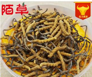 产地货源精选优质西藏那曲冬虫夏草散装批发4条/克全干新货上市