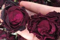 墨红玫瑰烤干花墨红玫瑰花冠茶 大量批发代发