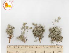 【新品上市】优质中药材批发 无硫中草药材绵茵陈 量大从优