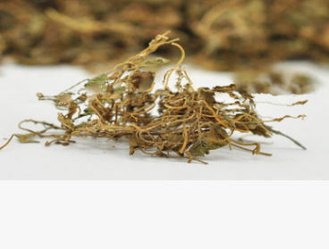 问心堂药业供应金精草马蹄金 荷苞草、肉馄饨草、金锁匙